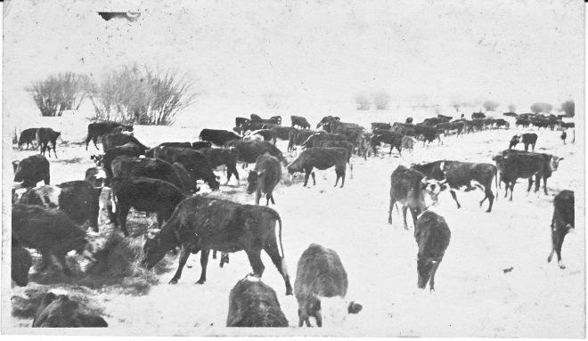 Dinwiddie Ranch 1